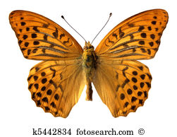 Fritillary Clipart and Stock Illustrations. 15 fritillary vector.