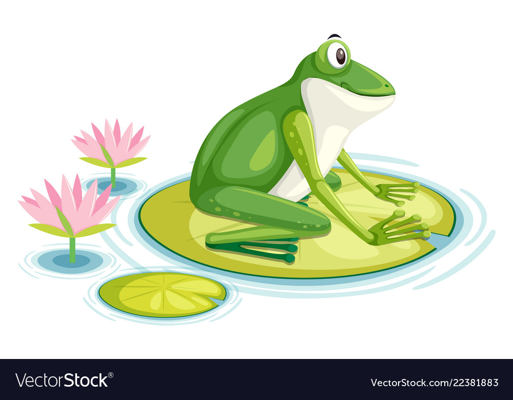 A frog on the lily pad.