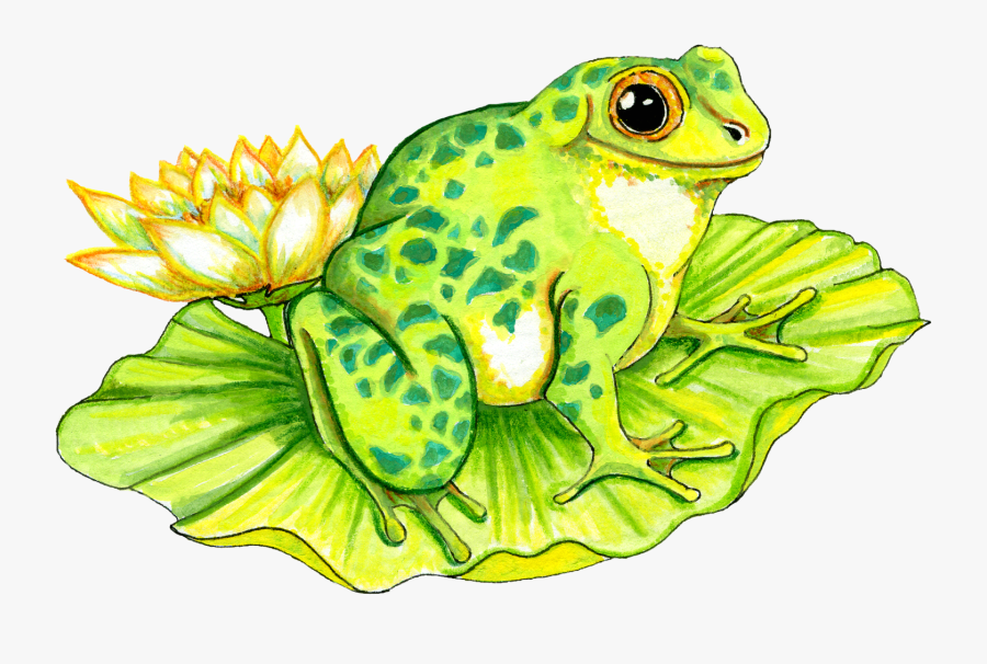 Frog On Lily Pad Drawing , Free Transparent Clipart.
