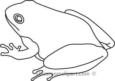 Animals : frog.