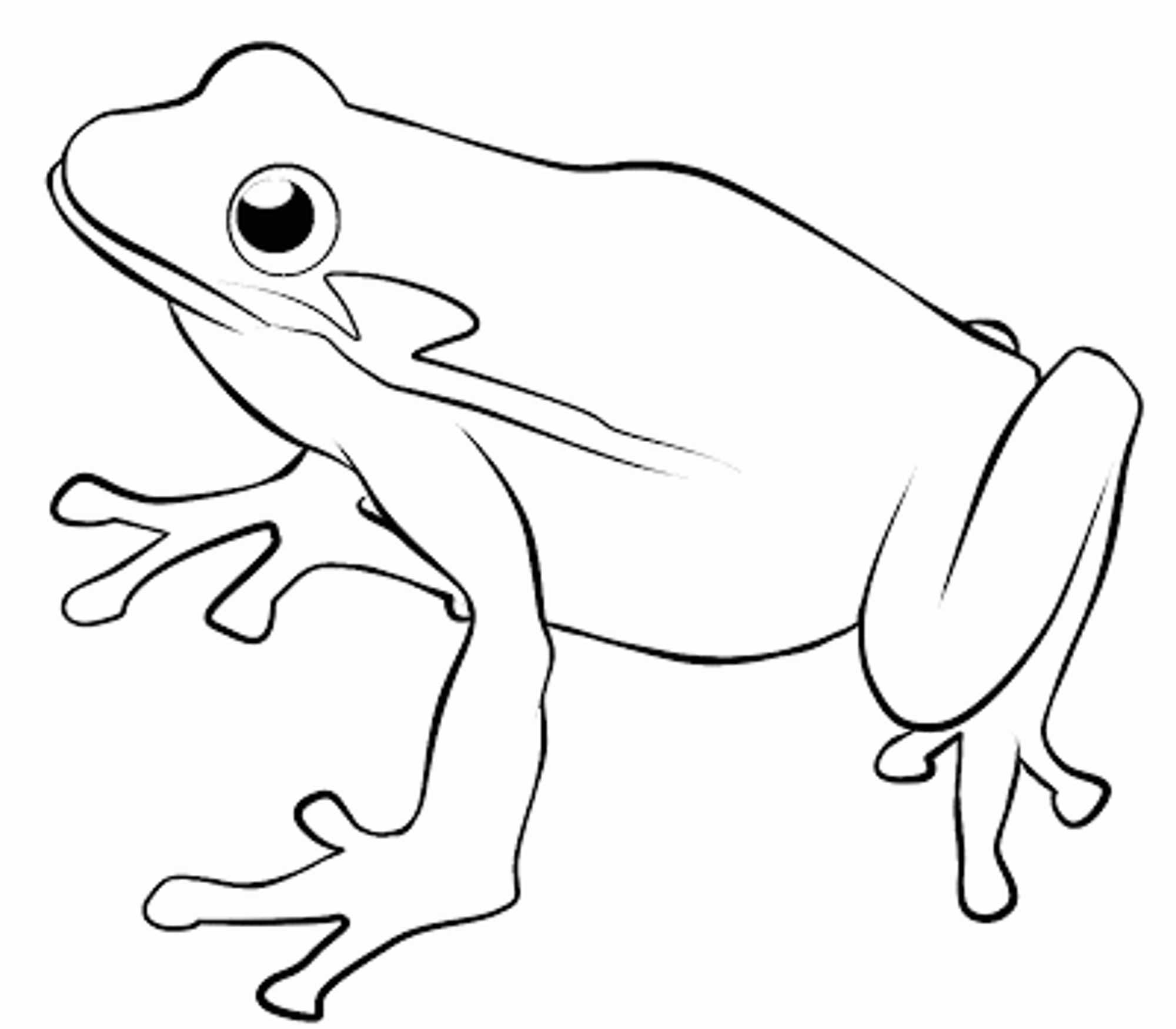 Line Drawing Of Frogs at GetDrawings.com.
