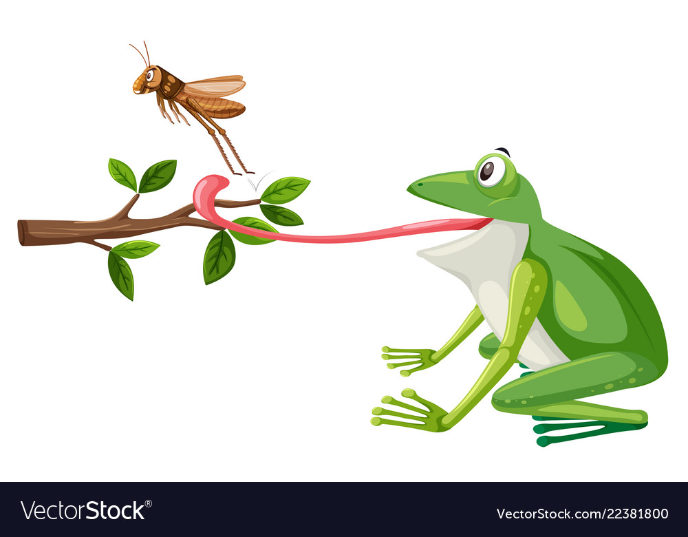 A frog try to eat grasshopper.