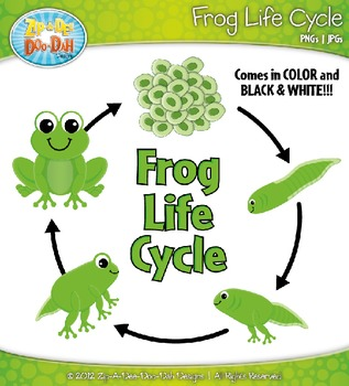 Frog Life Cycle Clipart {Zip.