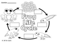 Life Cycle Of Frog Clipart Black And White.