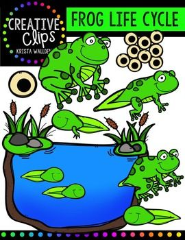 Frog Life Cycle {Creative Clips Digital Clipart}.
