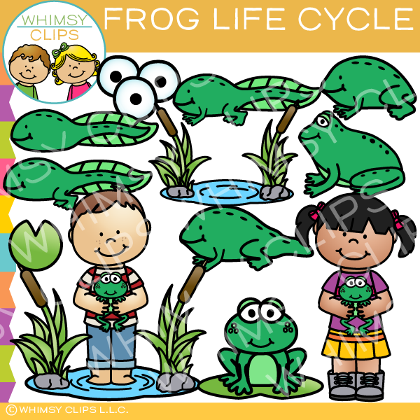 Frog Life Cycle Clip Art.