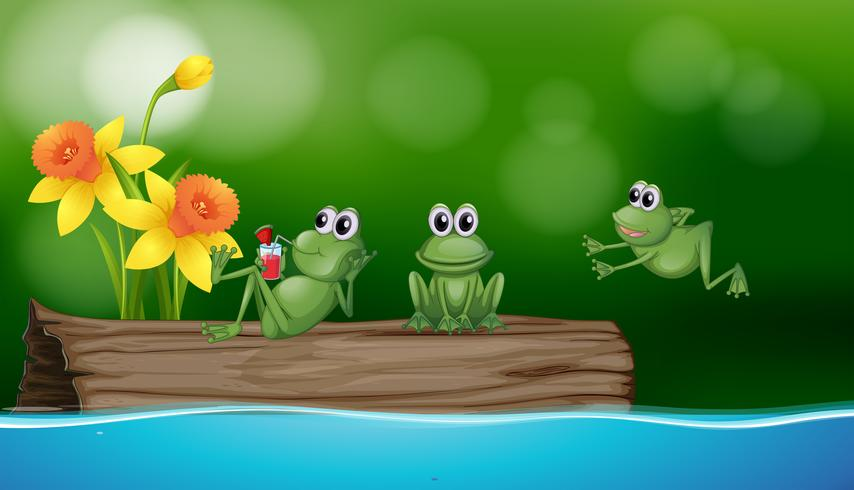 Three green frogs on the log.