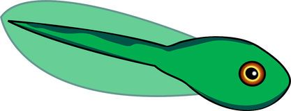 Tadpole to frog clipart 3 » Clipart Portal.
