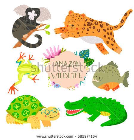 Rainforest Frog Stock Vectors, Images & Vector Art.