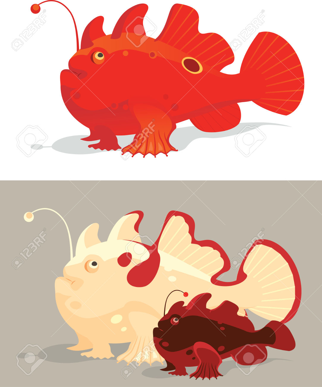 frogfish pictures.