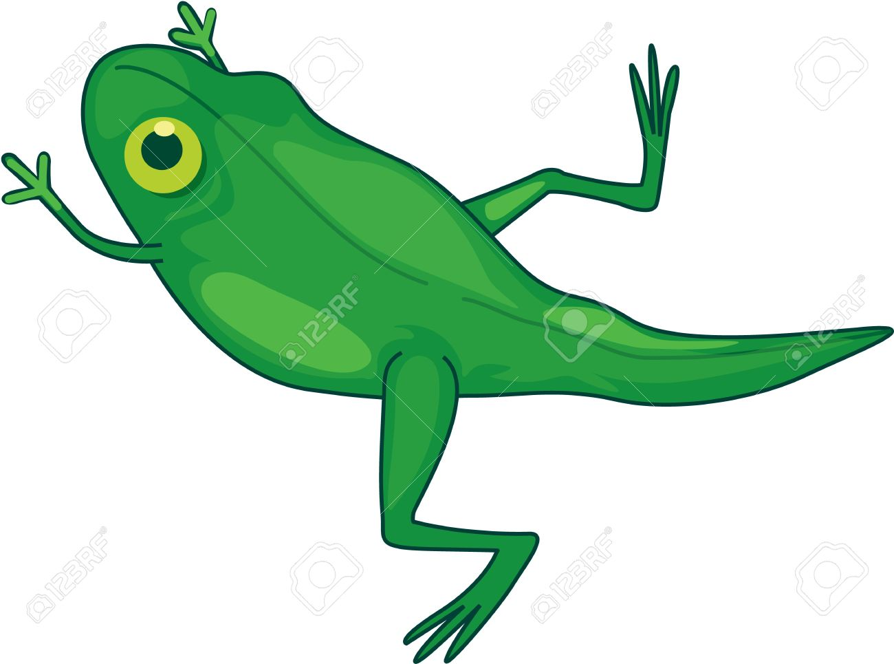 Collection of Tadpole clipart.