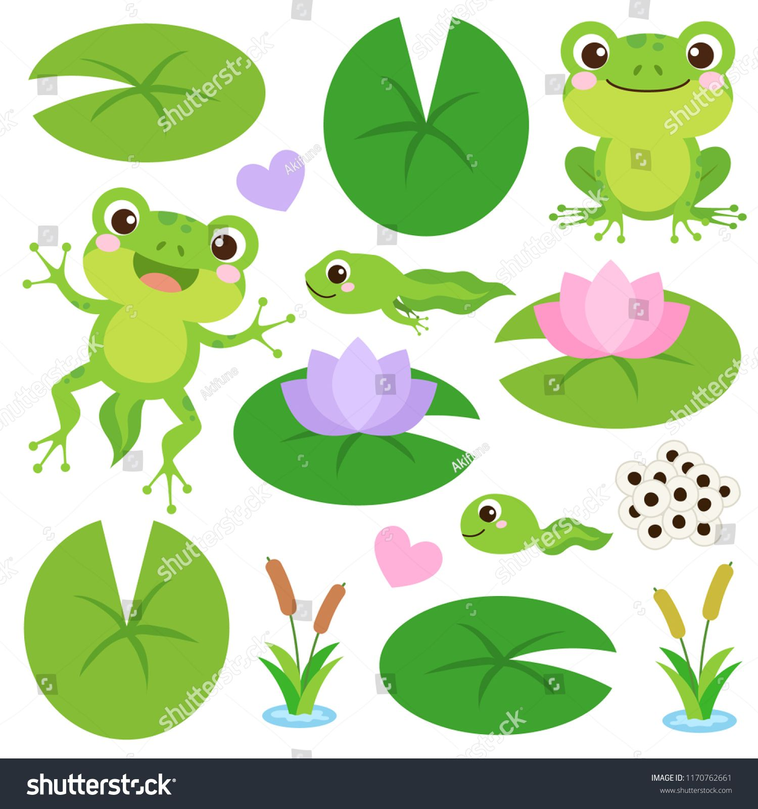 Set of Cute Frogs. Egg masses, tadpole, froglet, frog, hearts.