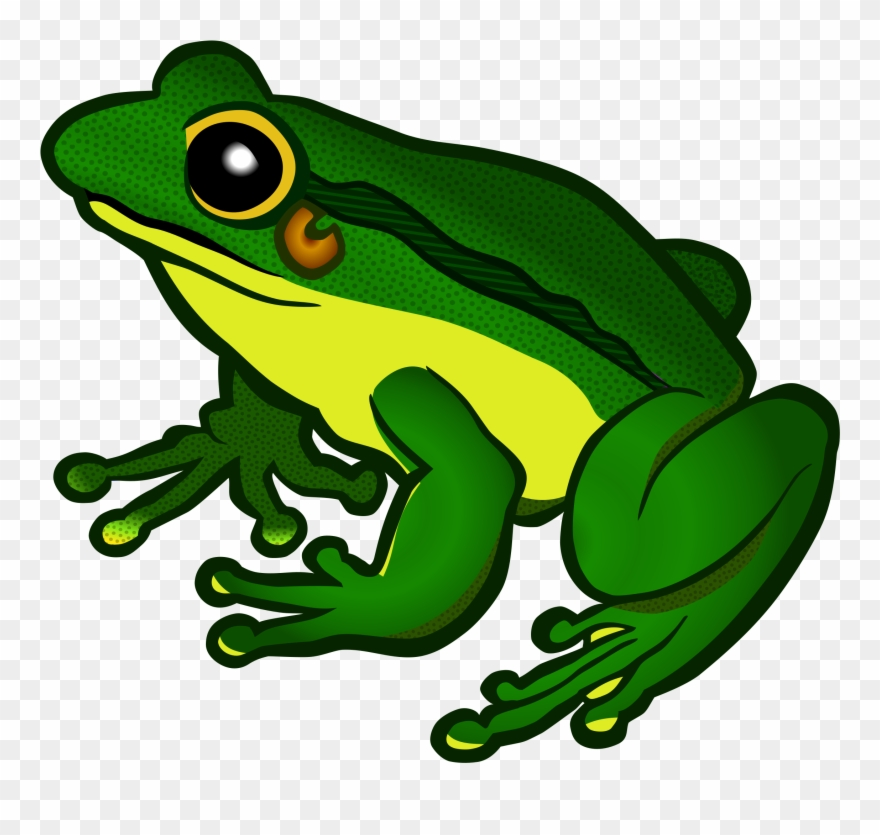 Green Frog Clipart Froglet.