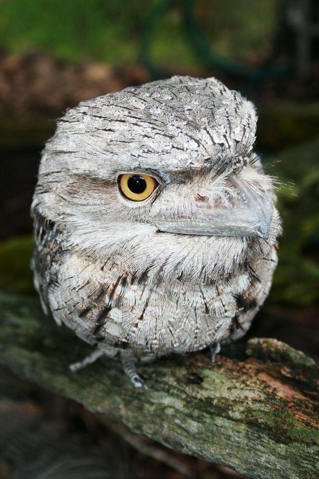 1000+ images about Australian Animals on Pinterest.