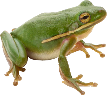 Frog PNG image free download image, frogs.