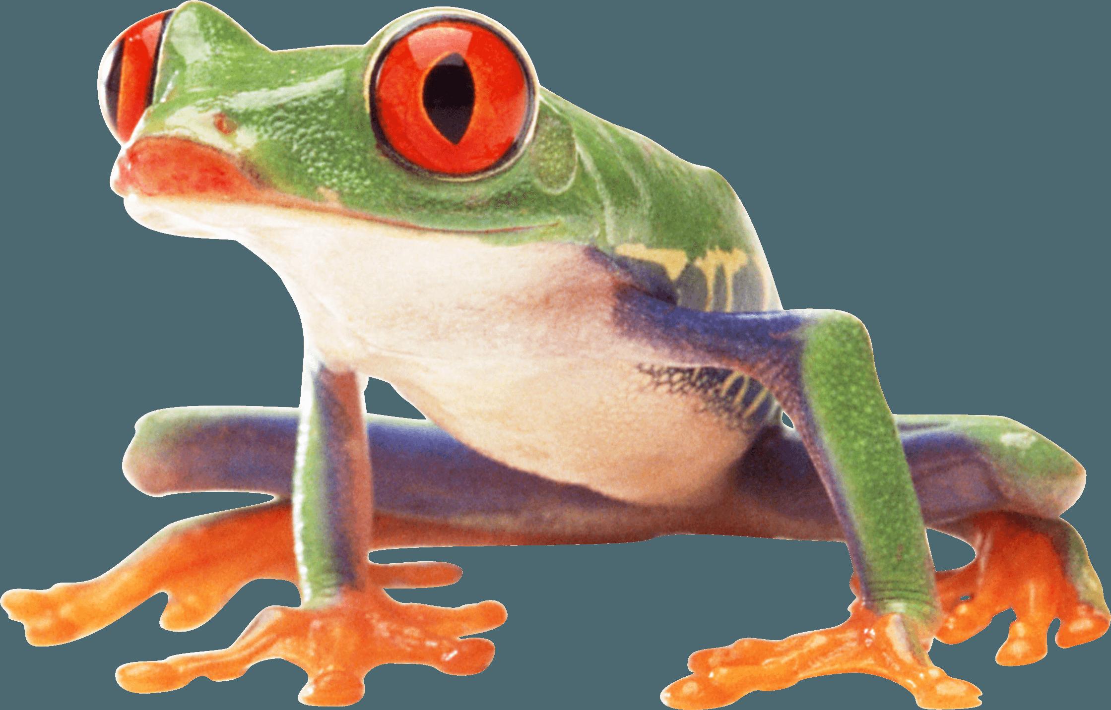 Frog PNG Transparent Frog.PNG Images..