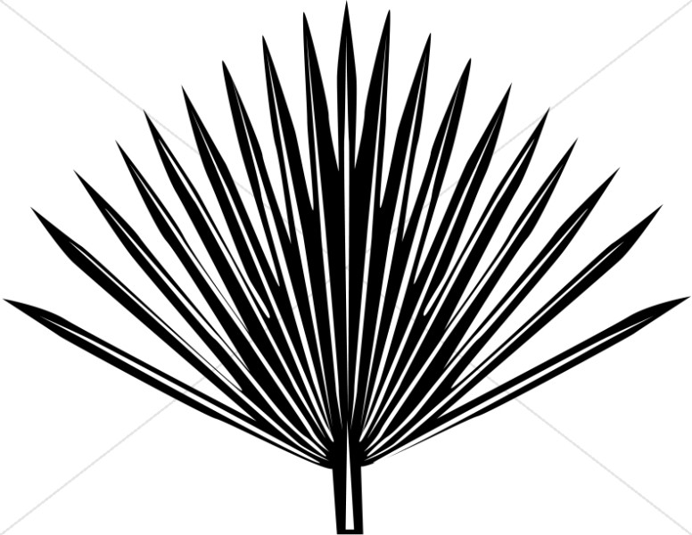 Single radiating Palm Frond.