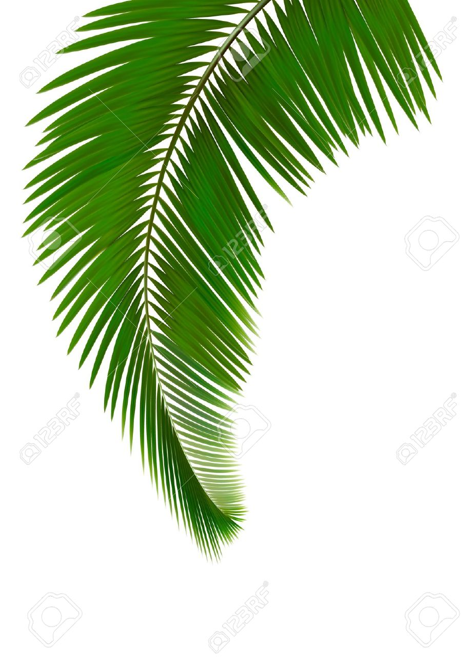 Palm frond background clipart.