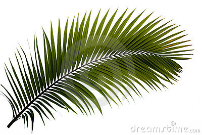 Frond Stock Illustrations.
