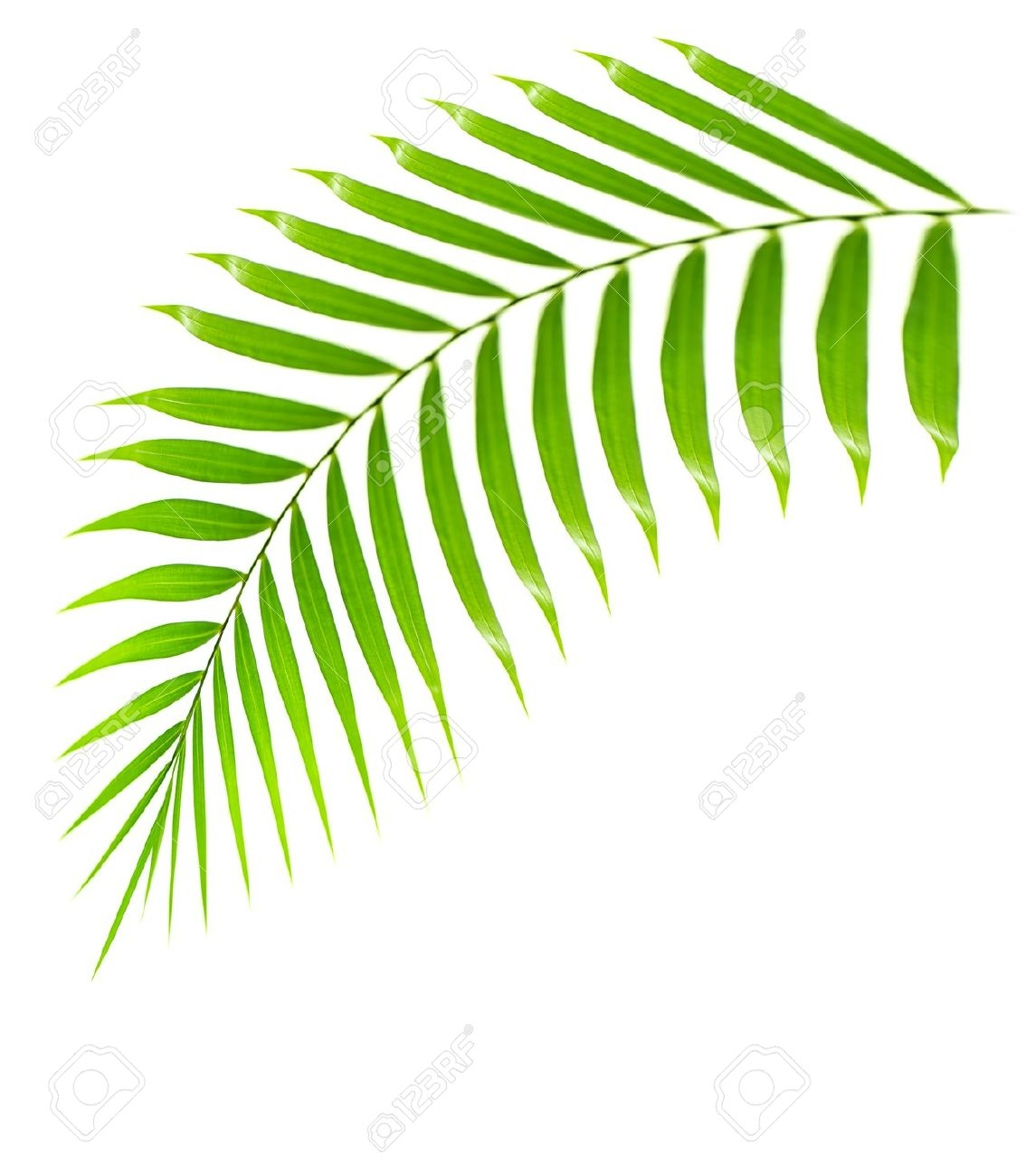 Palm frond palm leaf clipart #13