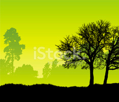 Tree Silhouette IN Front of The Woods stock vectors.