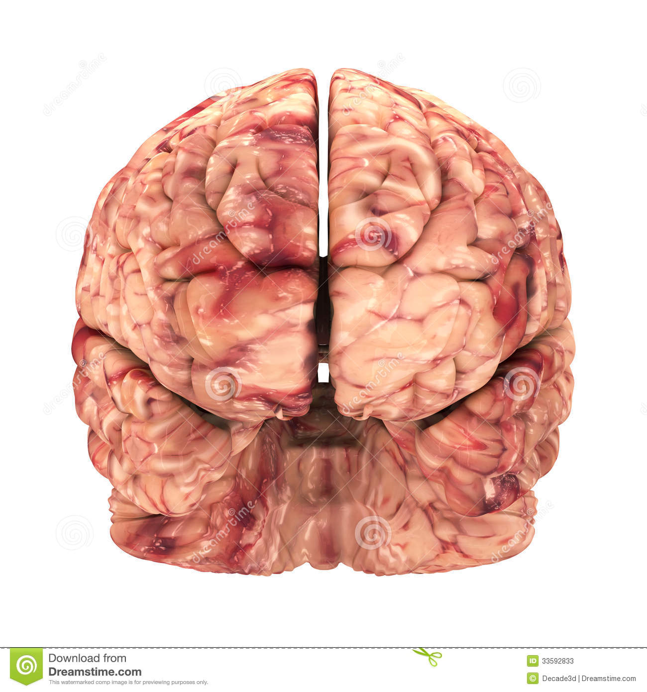 Illustration of head with brain frontal view clipart.