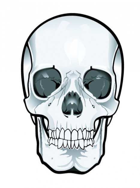 Frontal skull clipart Vector.