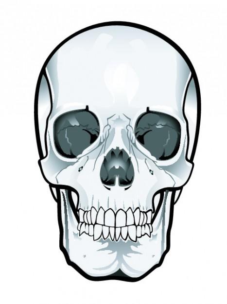 Frontal skull clipart Vector.