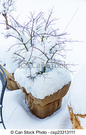 Stock Photography of snow flower pots.