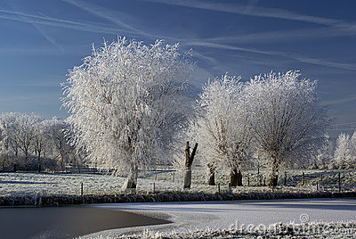 Frozen Fog On A Tree Royalty Free Stock Photography.