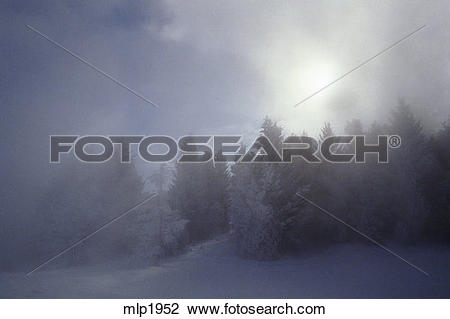 Stock Photo of Winter ice fog in the forest at Mammoth Hot Springs.