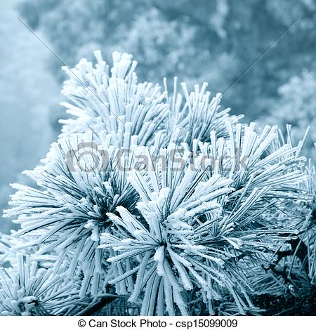 Stock Photography of ice fog on pine leaf.