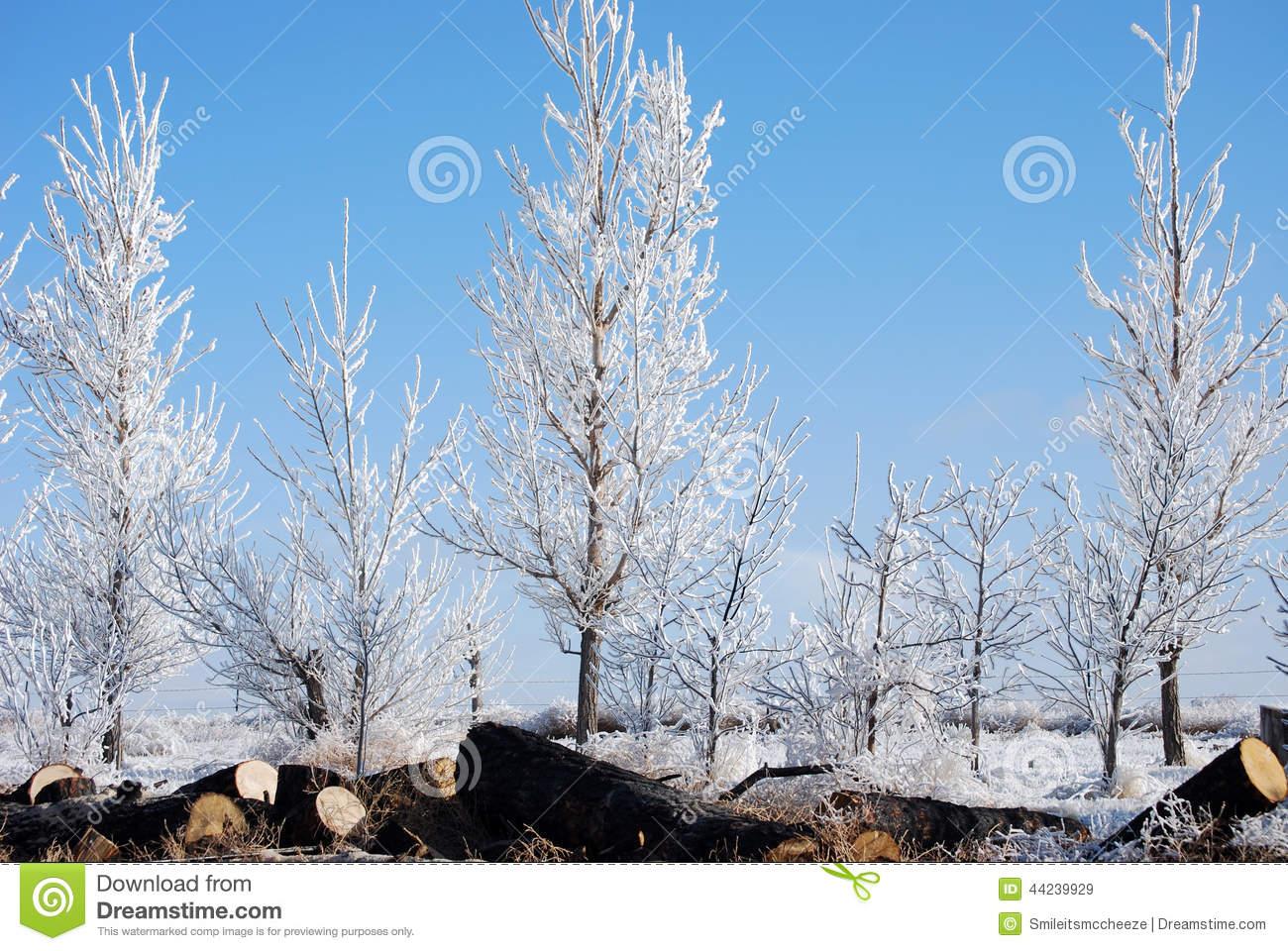 Trees Frozen Fog Stock Photo.