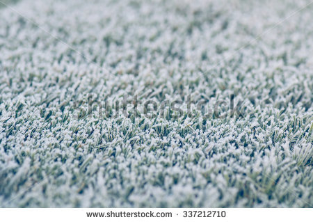 Frozen Grass Ice Stock Photos, Images, & Pictures.