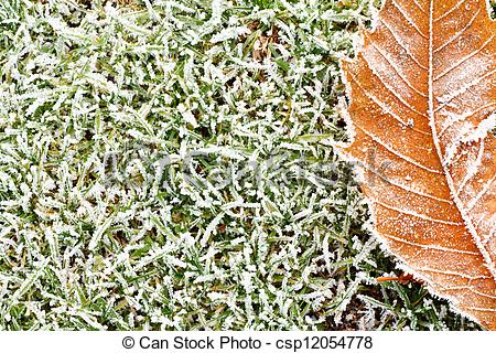 Picture of frosty grass and leaves background.