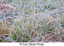 Stock Photography of frozen grass.