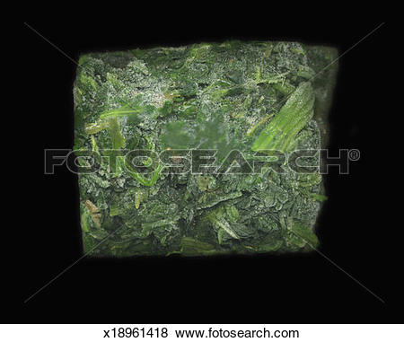 Pictures of Frozen block of spinach x18961418.