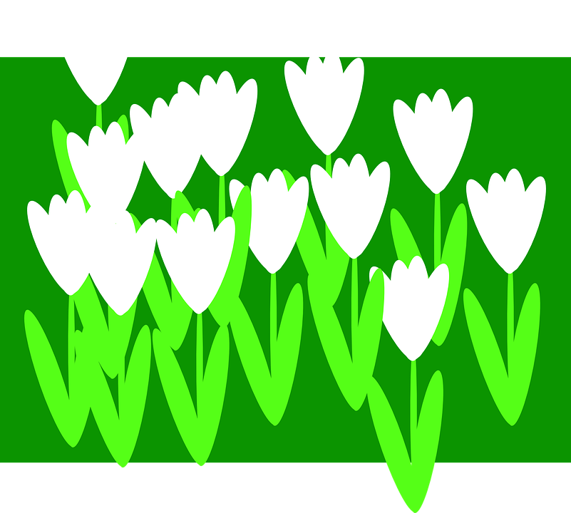 Free vector graphic: Flowers, Spring, Summer, Tulips.