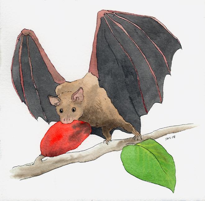 Drawings Of Fruit Bats.