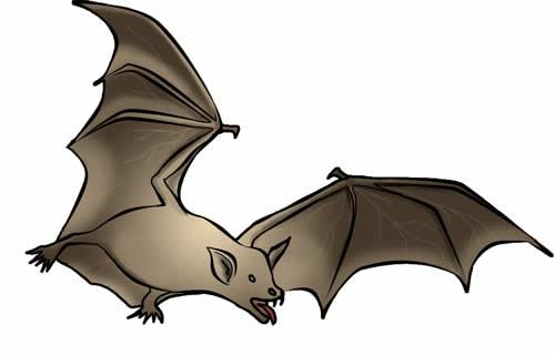 Similiar Bat Art Keywords.