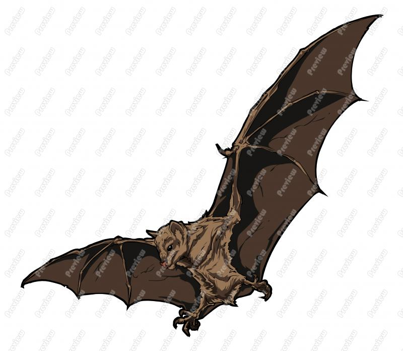 Fruit Bat Character Clip Art.
