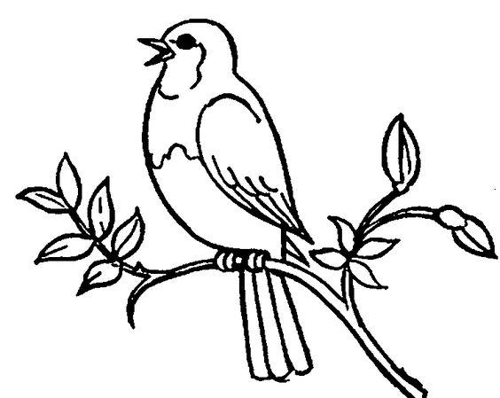 Fruit Bird Clipart