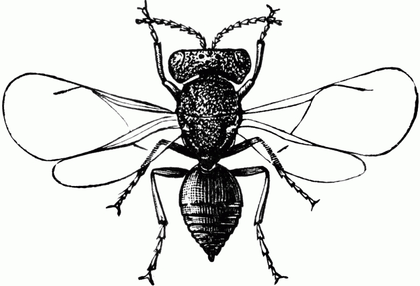 Fruit fly clipart - Clipground