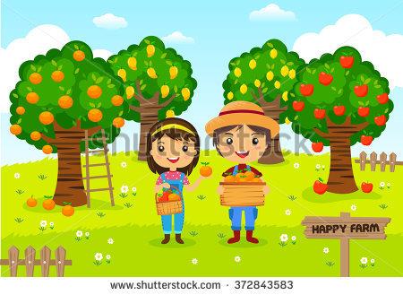 Mango Tree Stock Images, Royalty.