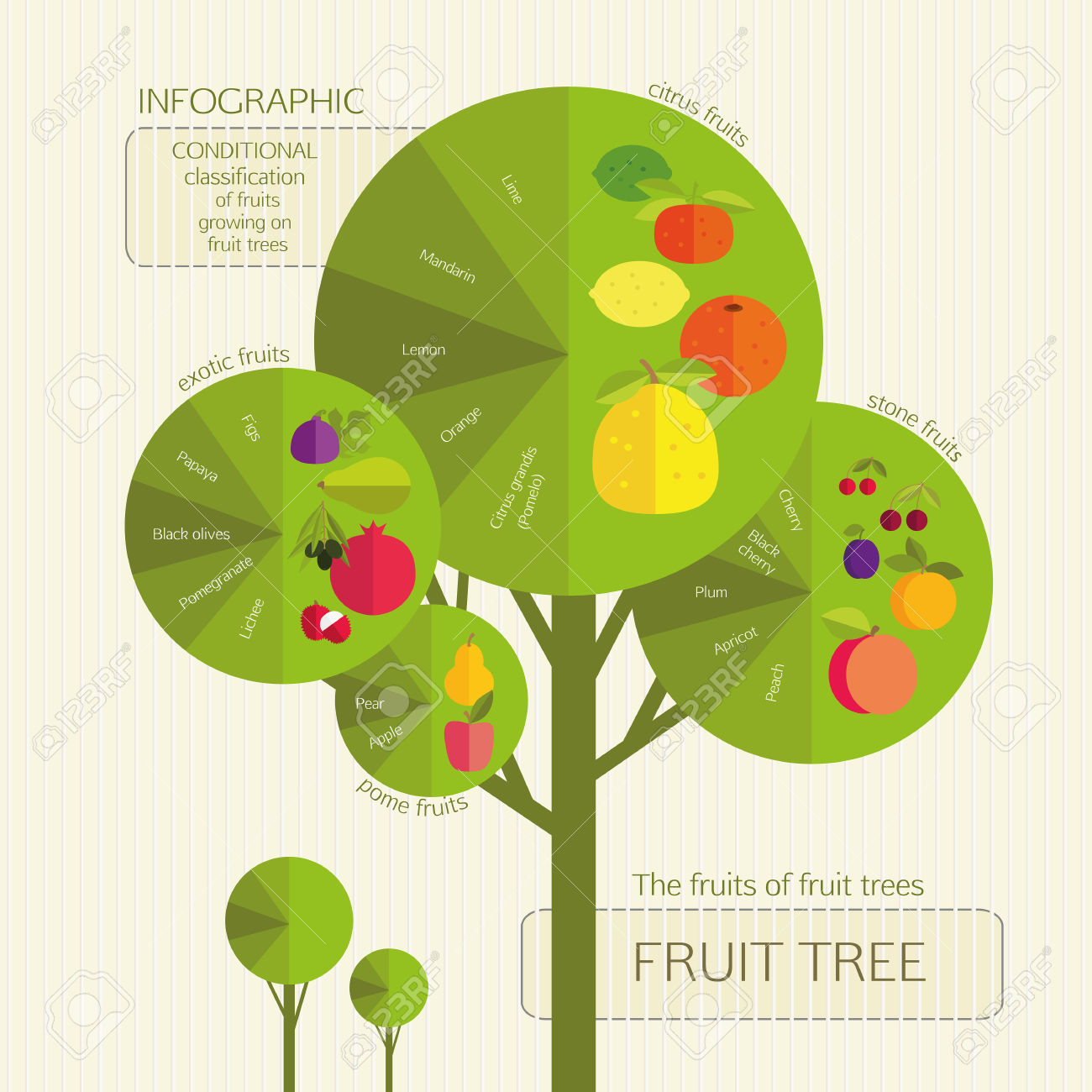 Gardening. Conditional Classification Of Fruits Growing On Fruit.