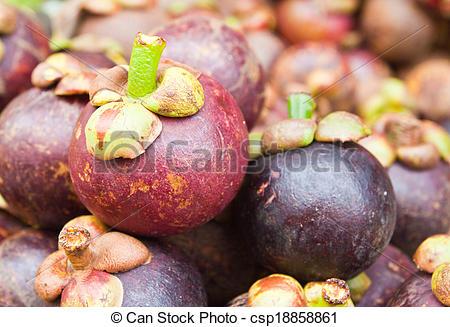 Stock Image of Tropical Fruit,Mangostee; Queen of fruit in.