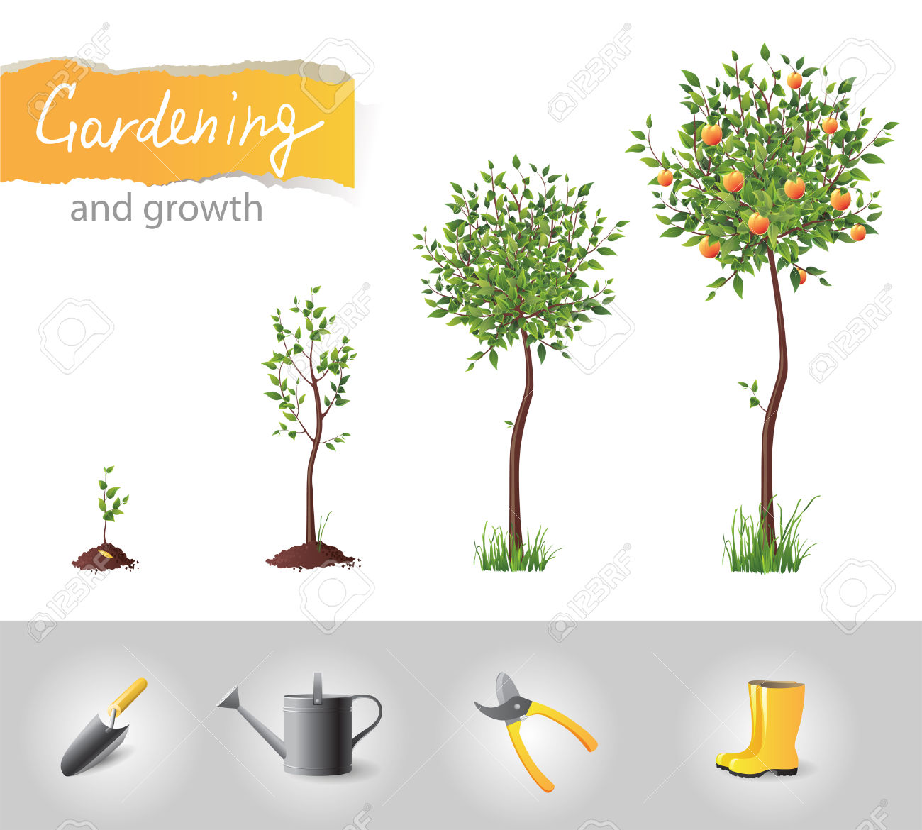 Growing Fruit Tree And Gardening Icons Royalty Free Cliparts.