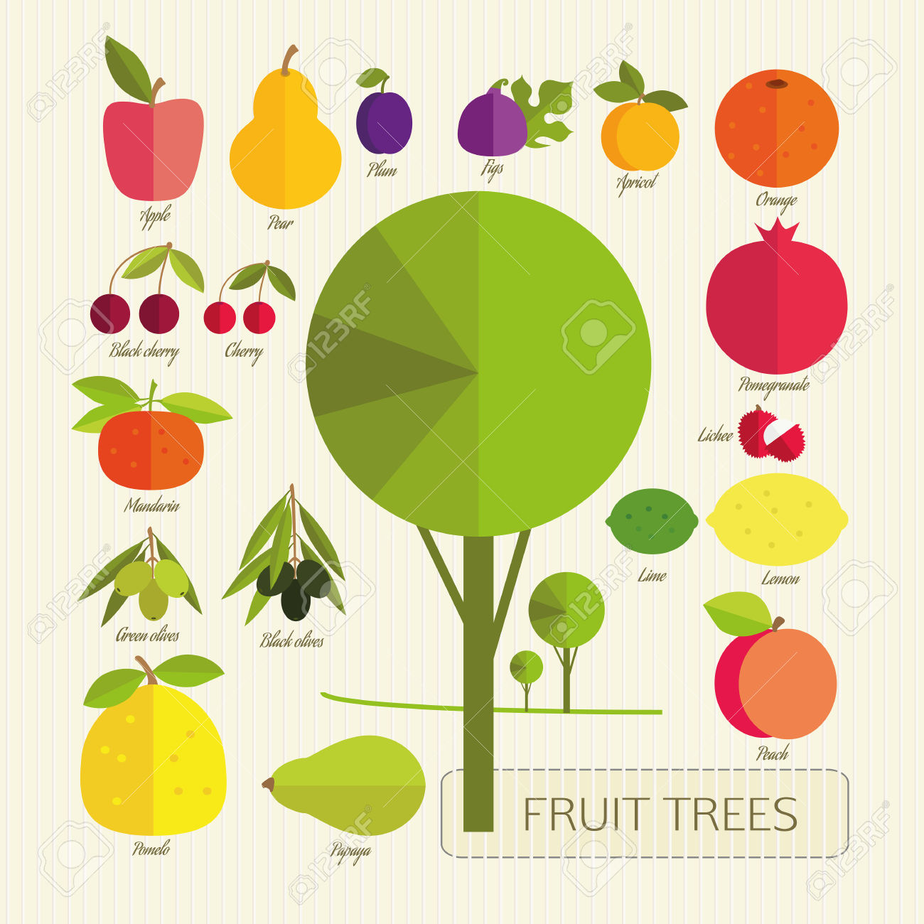 The Fruits Of Fruit Trees. Colorful Fruits And Tree On A Light.