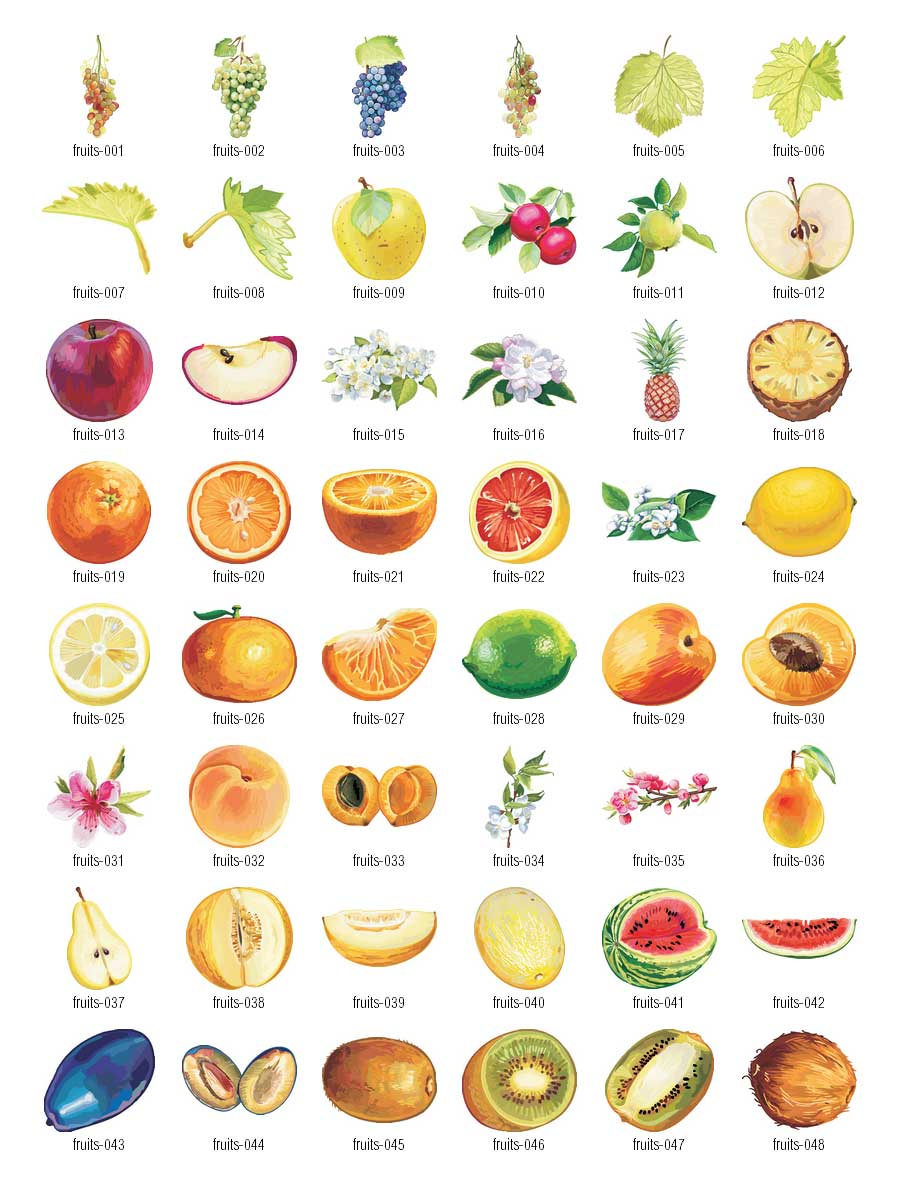 Fruits clipart vector.