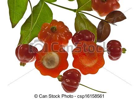 Stock Image of Pitanga Fruit.